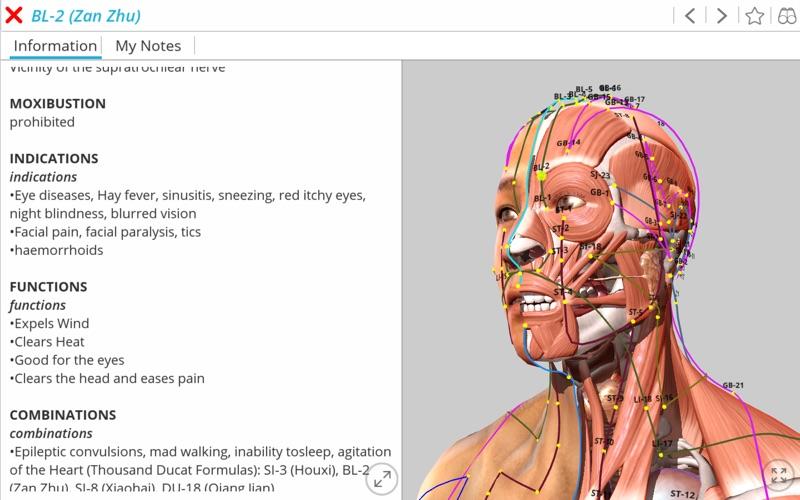 Visual Acupuncture 3D скриншот программы 1