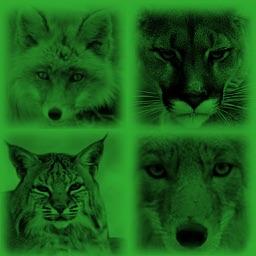 Predator Hunting Calls lite