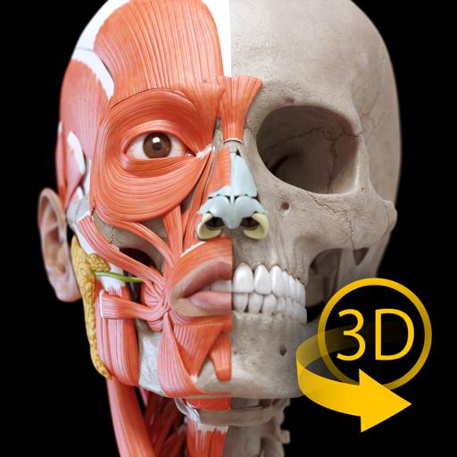Мышцы | Скелет - 3D Aнатомии