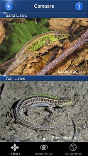 Reptile Id - UK Field Guide