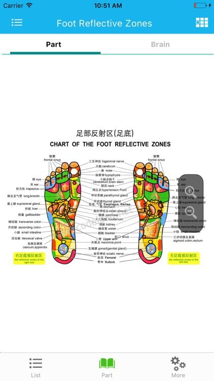 Foot Reflective Zones Handbook