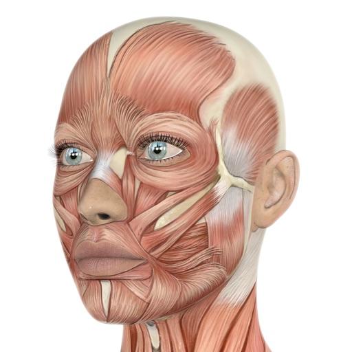 HumanAr Anatomy