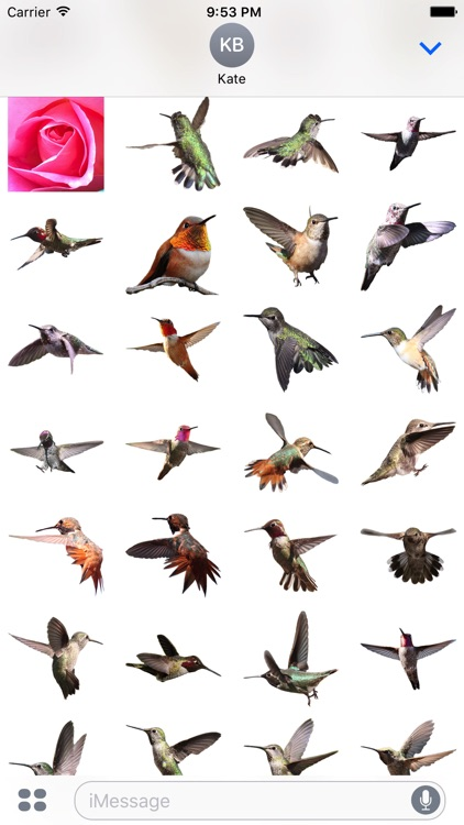 Hummingbird Sticker Pack screenshot-3