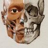 アーティストのための3D解剖学的構造 | バージョン 1.2 - iPhoneアプリ