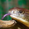 Christoph Duyster - Snakes  artwork