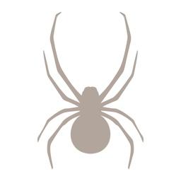 Fieldstone Guide: Spiders