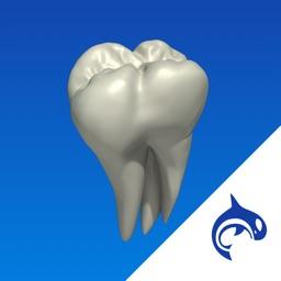 Dental Decide