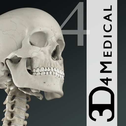 Essential Skeleton 4