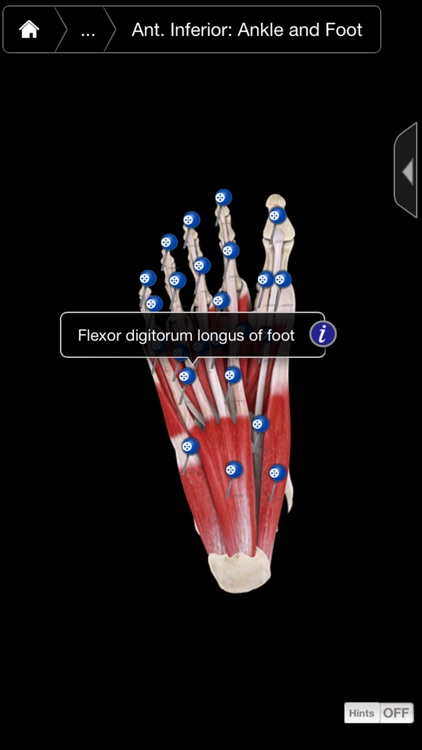 Muscle System Pro III - iPhone