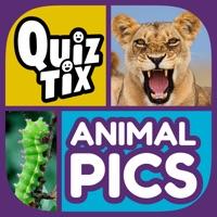 Codes for QuizTix: Animal Pics Quiz Hack