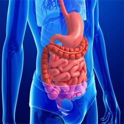 Human Anatomy : Digestive System