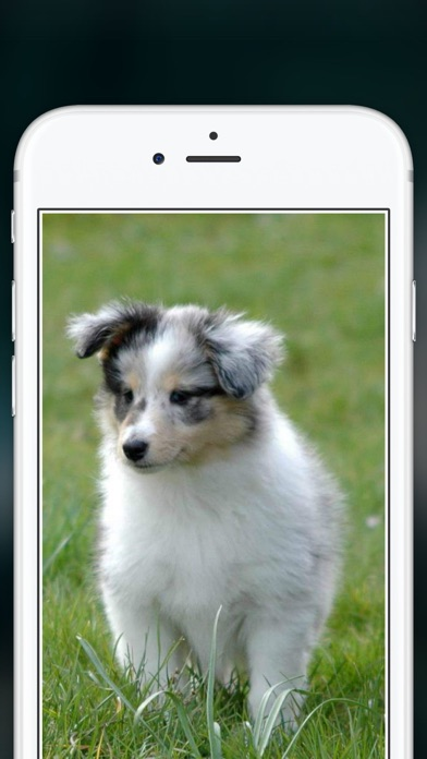 Cute Puppies Wallpapers  - dog pictures for free! screenshot one
