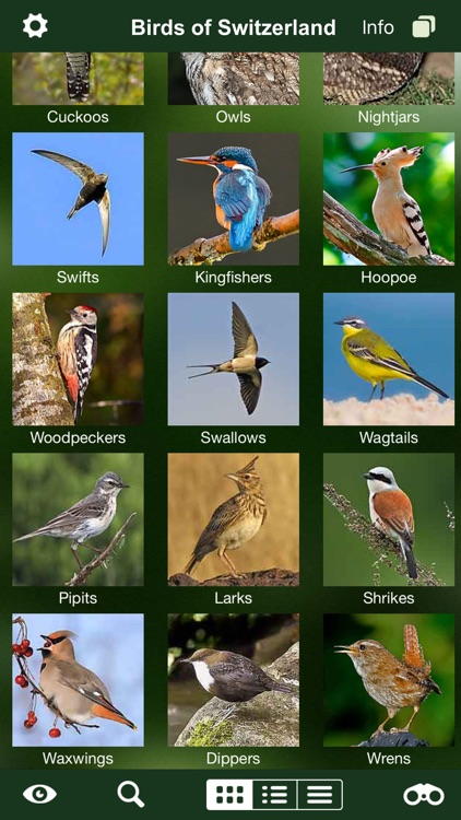 Birds of Switzerland - a field guide to identify the bird species native to Switzerland