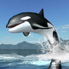 Activities of Orca Survival Simulator
