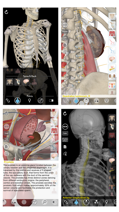 3D Organon Anatomy - Reproductive and Urinary Systems screenshot two