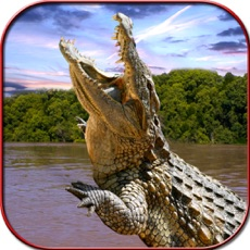 Activities of Crocodile Attack Simulator