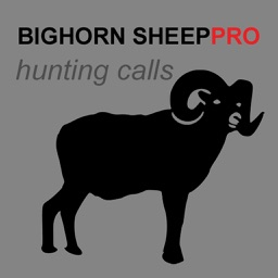 REAL Bighorn Sheep Hunting Calls - 8 Bighorn Sheep CALLS & Bighorn Sheep Sounds! -- (ad free) BLUETOOTH COMPATIBLE