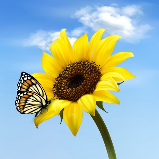 Sunflower Wallpapers HD: Quotes Backgrounds with Art Pictures icon
