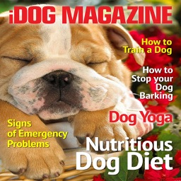 iDog Magazine - The Best new Dog, Puppy Training, advice and tips Magazine for Dog Owners