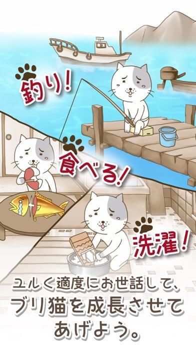 ブリ猫紹介画像2