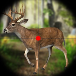 Deer Hunting Safari Adventure