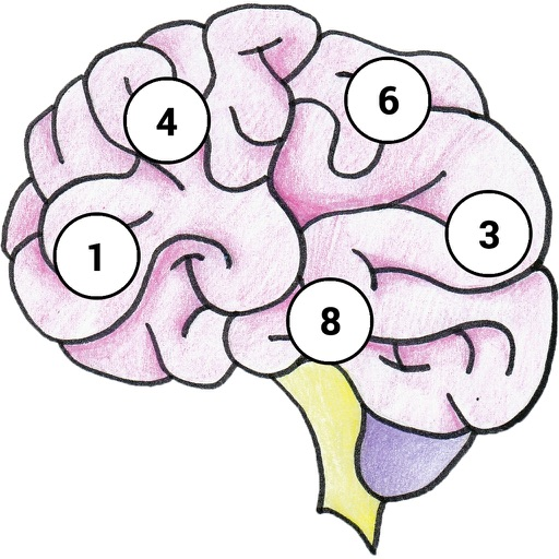 Brain MemEx