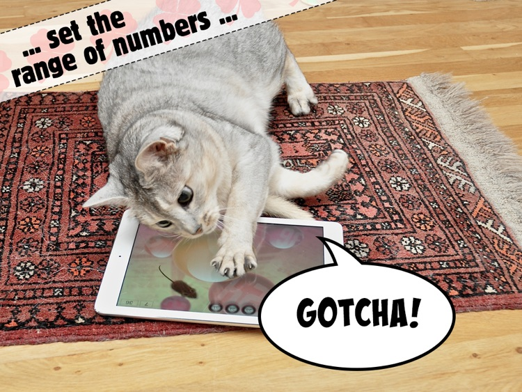 Lucky Cat Lottery Numbers - Catch Game For Cats