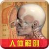 人体解剖-医学名师基础知识宝典视频教程
