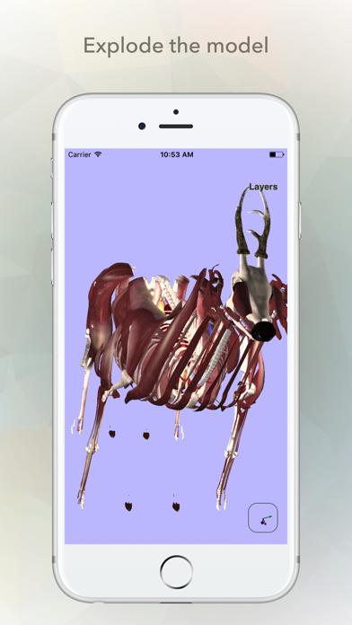 Deer Anatomy screenshot three