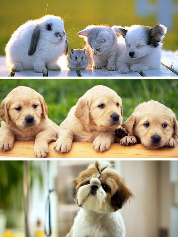 Cute Baby Pet Pictures Puppy Animals Wallpapers Online Game Hack And Cheat Gehack Com