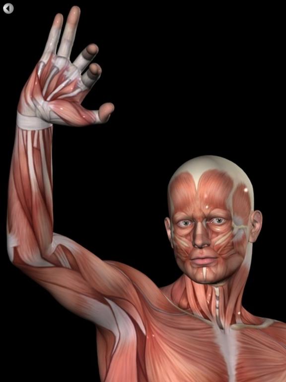 360 Anatomy for Artists HD: Male Figureのおすすめ画像5