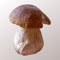 Myco is the perfect app for people who collect mushrooms
