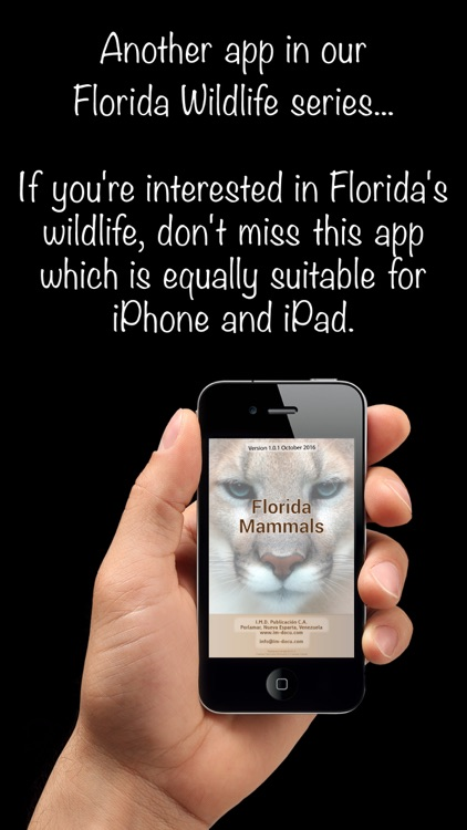 Florida Mammals – Guide to Common Species