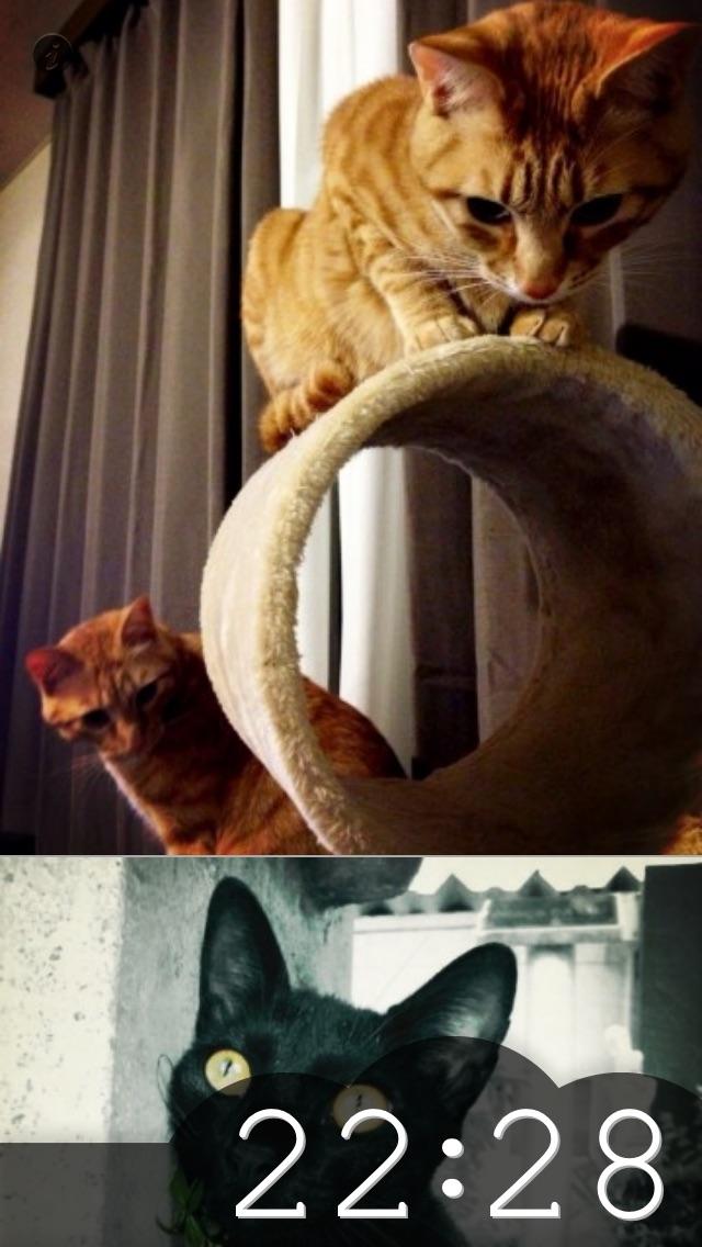 にゃんこクロック 猫好きの猫好きによる猫好きのための時計紹介画像2