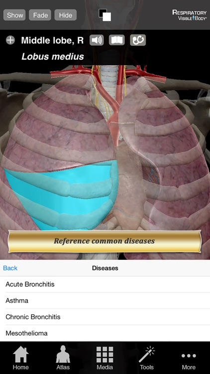 Respiratory Anatomy Atlas: Essential Reference for Students and Healthcare Professionals screenshot-4