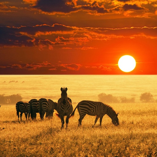 Africa Wallpapers & Backgrounds HD For IPhone By Guns