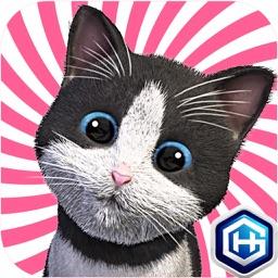 Daily Kitten 데일리키튼 귀여운 아기 고양이