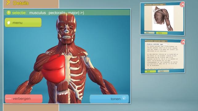 Easy Anatomy 3D Screenshot