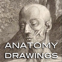 Drawings: Anatomy Masters