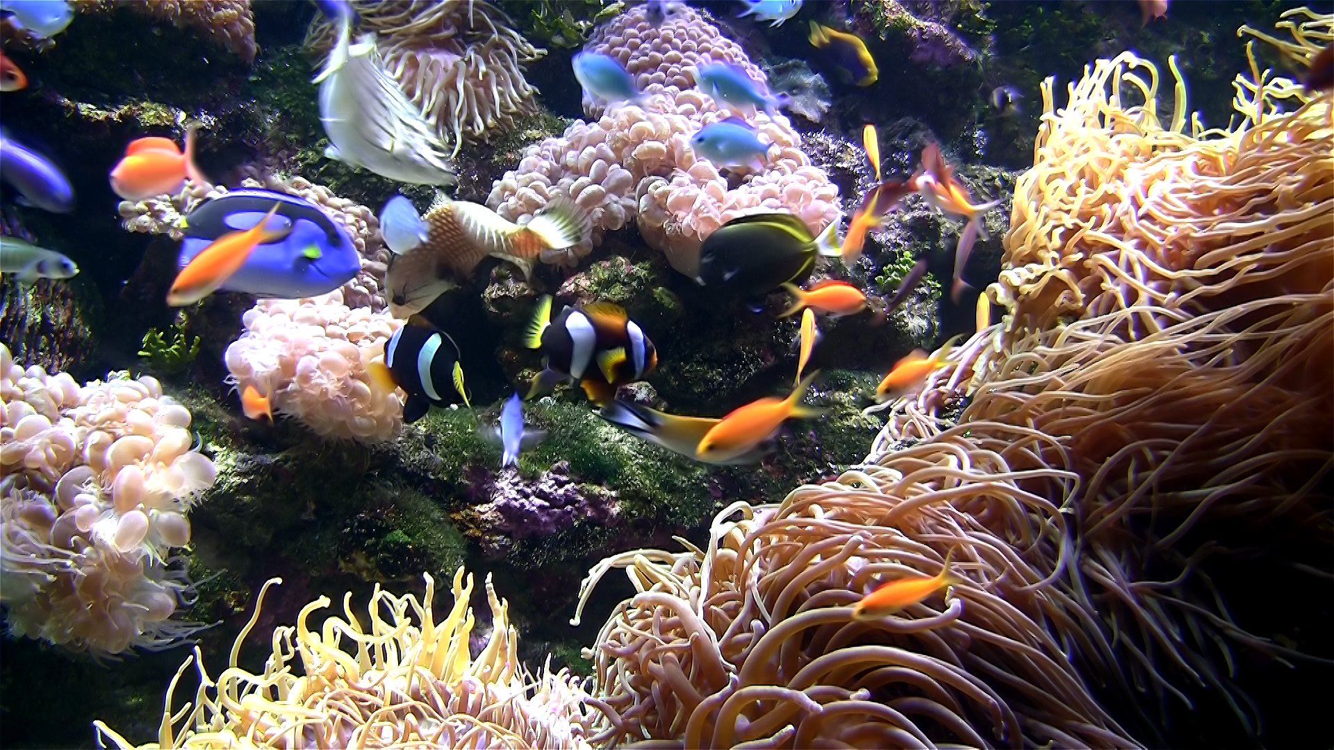 Aquarium live HD TV: Coral reef scenes with relaxing nature & ocean sounds for stress relief screenshot 3