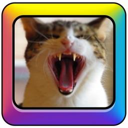 Cat Toy Deluxe