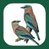 eGuide to the Handbook of Bird Identification for Europe and the Western Palearctic