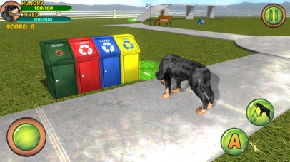 download Rottweiler Dog Life Simulator