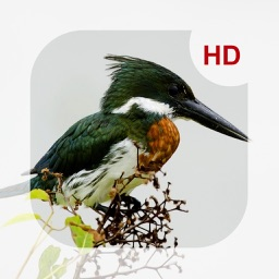 Animals & Birds HD Wallpaper - Great Collection