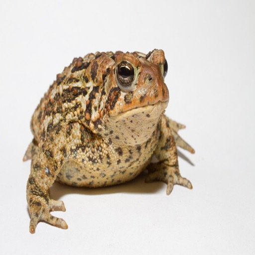 Toad Sounds - High Quality Sounds of Toads and Frogs