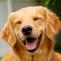 Dog Sounds : Fun sounds for dog lovers, kids and adults