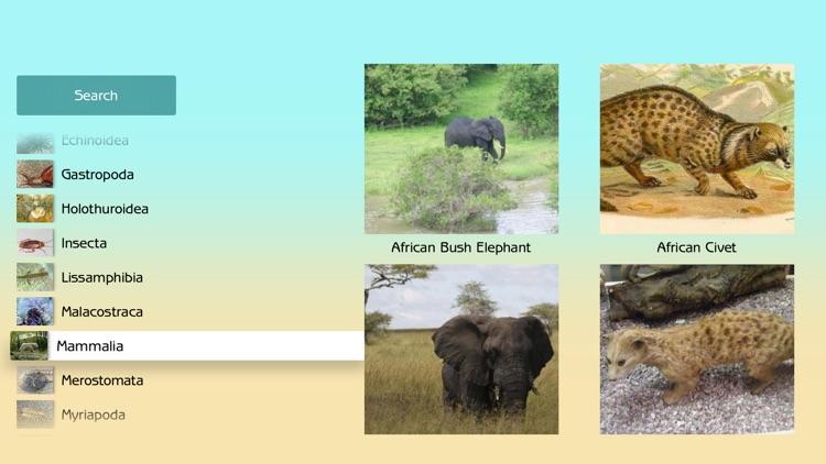 Atlas Animals