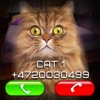 Fake Video Call Cat - iPhoneアプリ