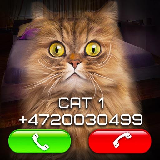 Ложный Видео Вызов Кот