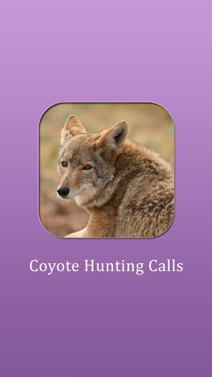 Coyote Hunting Calls!